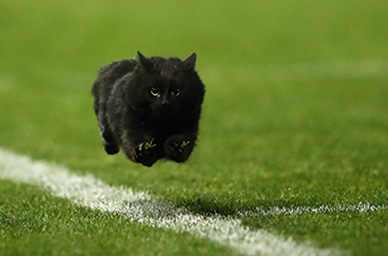 A Black Cat Crosses the Internet's Path