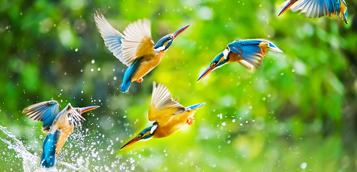The beauty, freedom, appreciation of the gift of waking up each morning able to view such incredible Creations!  Kingfishers